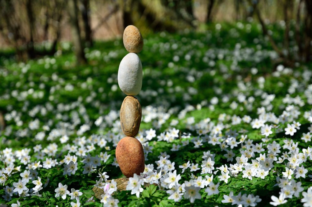 Spring Flowers and Rock Balance